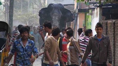 Crowds gathered to watch the elephant's carnage. While it did not shy away from running into cars and buildings, it steered clear of people. (AP)