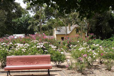<strong>Rumsey Rose Garden, Parramatta</strong>