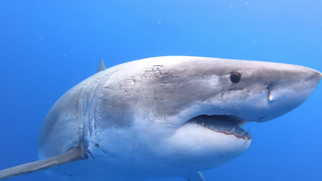 "A new research project is looking at Australia's attitude towards sharks and how more ""positive"" experiences with them can ease the fear of being attacked."
