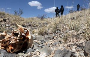 Over 100 bodies found in secret Mexican graves