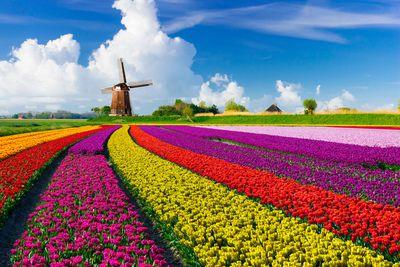 9. Netherlands