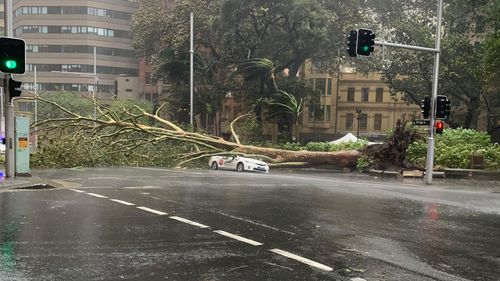 A tree fell on top of a taxi travelling carrying three passengers in the Sydney CBD.