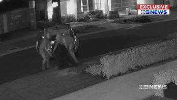 Thieves filmed stealing artificial lawn from homes