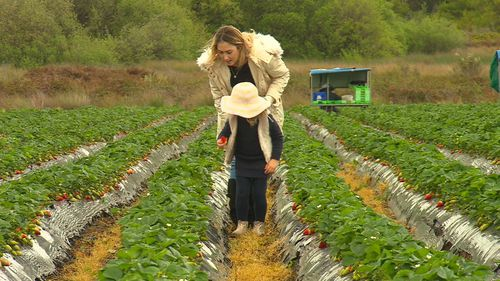 The Sherry family were among thousands of farmers left uncertain about their futures following the 'strawberry saga'.