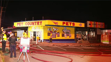 A large fire has ripped through several businesses south of Brisbane overnight, sadly resulting in the death of a number of pet shop animals.