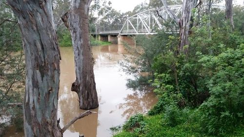 The Goulburn river, located in the small village of Murchison, is one of the many Victorian rivers left swollen by recent rains. (Facebook/Murchison SES – Victoria State Emergency Service)