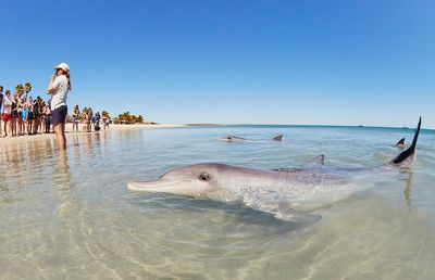 Meet the dolphins at Monkey Mia, WA