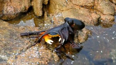 <p>The internet offered up some tasty viewing this week to spice up Facebook walls and enliven workplace watercooler chat.</p><p>  One of the most popular viral videos enjoyed by ninemsn readers was a Western Australian octopus showing a crab who is boss. </p><p>  The footage, taken in Yallingup, shows the hyper-aggressive eight-legged predator emerge suddenly from its watery home in a tide pool to snatch the unsuspecting crustacean for its lunch. </p><p>  The poor crab is devoured helplessly as the videographer, Porsche Indrisie, can only look on helplessly. </p><p>  Other popular videos included a table tennis player in the US hitting a miracle arm-behind-his-back shot, and Reese Witherspoon making a grab for Jennifer Anniston's butt at the Oscars on Sunday. </p><p>  Click through for this week's most-viewed viral videos. </p><p></p>