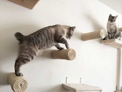 Cat climbing wall
