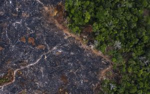 Deforestation or development? Brazil's Amazon at a crossroad