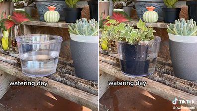 Plant watering hack