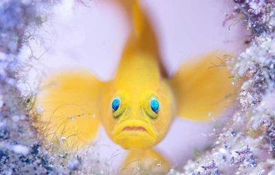 Underwater by Wayne Jones