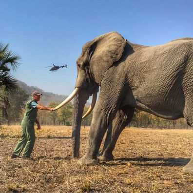 Prince Harry loses complaint against 'inaccurate' article over elephant photo