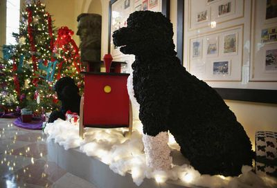 The Obama family's dogs Bo and Sunny sit amongst decorations in the East Garden Room of the White House. (Alex Wong/Getty)