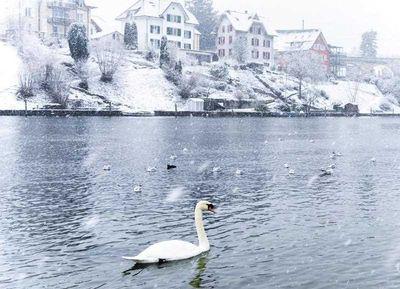 Switzerland: The Rhine River in Schaffhausen became a winter wonderland