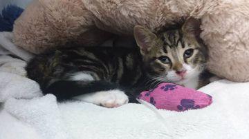 Kitten survives spin cycle in washing machine