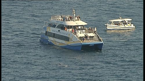 The sighting sparking a rescue operation from nearby vessels. Picture: 9NEWS
