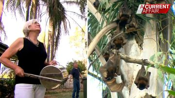Couples 'tropical paradise' ruined bat colony