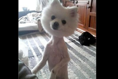 Image: <a href=http://vir4l.com/why-is-this-dog-shaved/>vir4l.com</a>