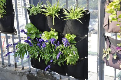 "<strong>Vertical Hanging Garden, $34.95, <a href=""https://www.templeandwebster.com.au/Vertical-Hanging-Garden-9-Pocket-GRVERBLF-TPWT1217.html?refid=GPAAU447-TPWT1217&device=c&ptid=274693514801&gclid=COKR1fyI_9ACFY0GKgodm7kKwA"" target=""_blank"">Temple and Webster</a></strong>"