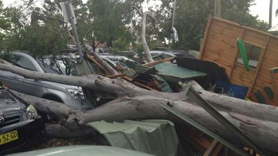 A gumtree has crushed a cubby house and four cars in a carpark at Doonside. (9NEWS, Chris O'Keefe)