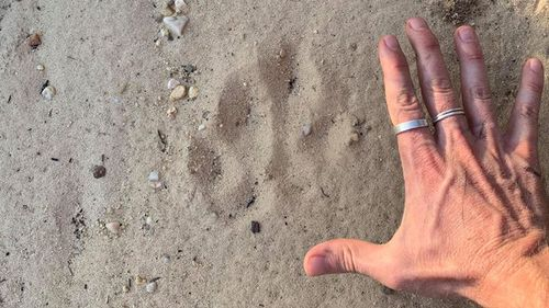 Giant 'paw print' discovered by Blue Mountains Explore.