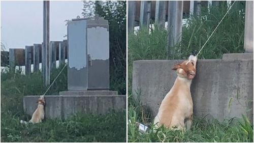 Sixteen-year-old Max was found tied to an electrical box on the side of a busy Missouri motorway.