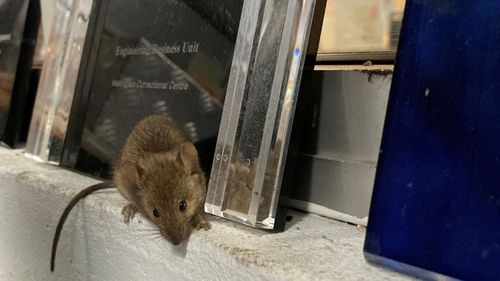 The mouse plague has forced the prison to close for repairs with inmates and staff being relocated.