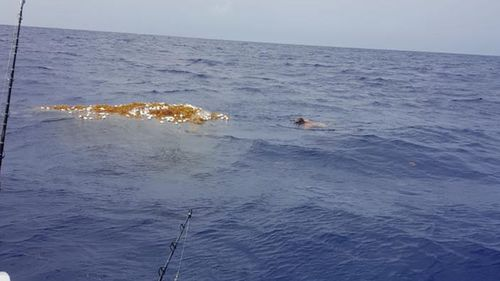 The authorities are now trawling the Caribbean in search of the 'ghost net'. Picture: Dominick Martin-Mayes.
