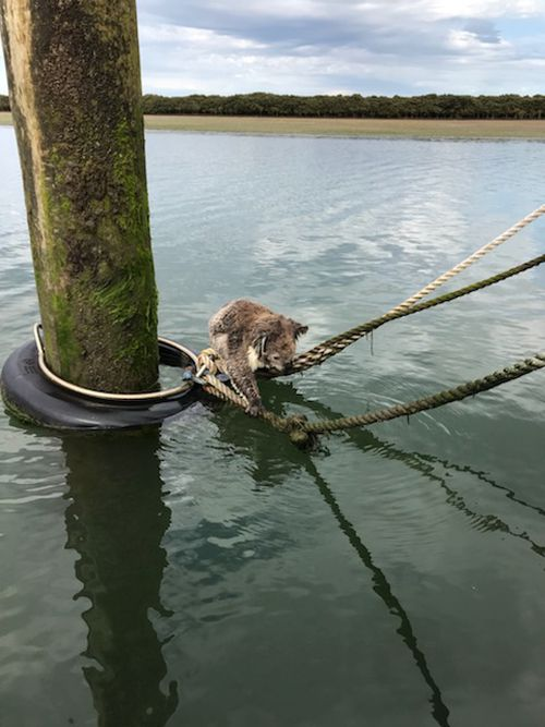 The marsupial looked a little soggy...