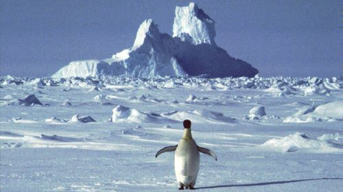 In this undated file photo, a lonely penguin appears in Antarctica during the southern hemisphere's summer season.