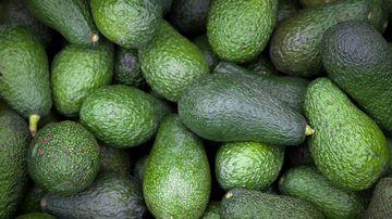 Avocado prices continue to skyrocket