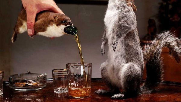 Brewdog's The End of History beer is bottled in a taxidermy squirrel