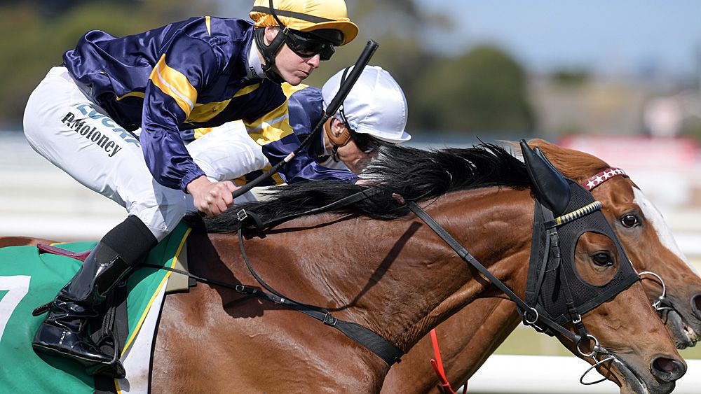Vengeur Masque wins Geelong Cup but not assured start at Melbourne Cup