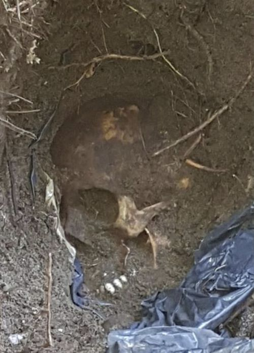 One of the 166 skulls found in the unmarked grave, possibly the victim of a drug cartel.