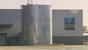 Five employees at the Huon Aquaculture salmon processing plant have been charged after allegedly stealing 250 tonnes of fish.
