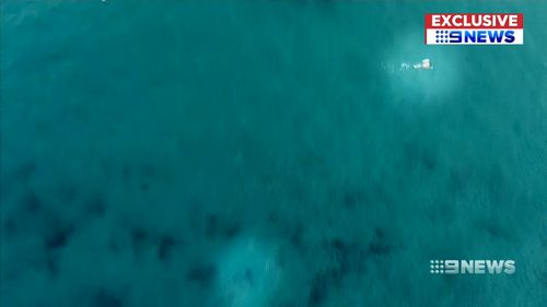 At one stage the shark was just 20 metres away from an unsuspecting swimmer off the Bondi shoreline.