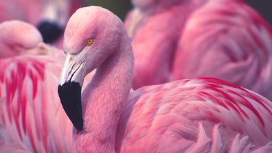 Flamingo dies in zoo after child threw rocks at it
