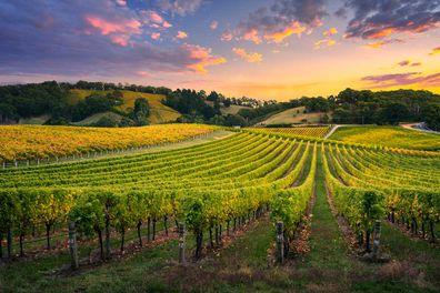 Barossa Valley Food & Wine experience,  South Australia