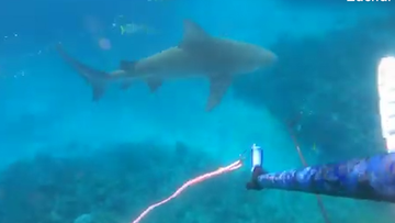 Within seconds of Mr Schmidt firing his gun, two large bull sharks emerged from the depths.