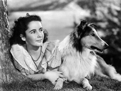 Elizabeth Taylor in 'The Courage of Lassie'.