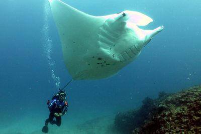 <strong>Swim with manta rays </strong>