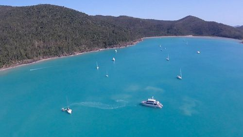 Cid Harbour is a popular anchorage location for charter boats that flock to the Whitsundays, despite the heavy shark population.