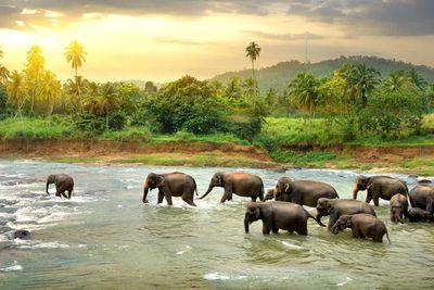 5. Sri Lanka