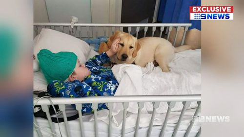 Logan Reese with his service dog Hunter in hospital.