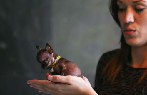 Milly was small enough to fit in a teaspoon when she was born. Image: Facebook
