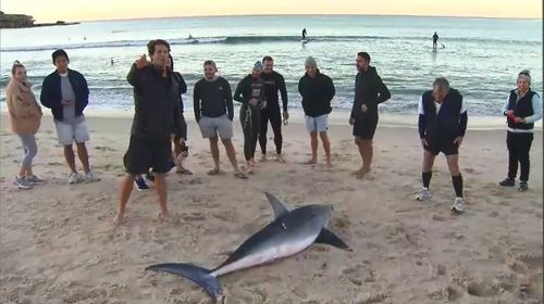 A small crowd gathered to see the animal, which had been moved onto the beach and out of the ocean by surfers. Picture: 9NEWS.