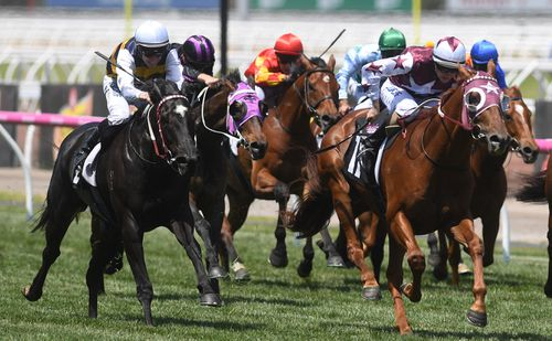 The allegations of doping have rocked the horse racing industry. None of the pictured horses are in any way linked to the Racing Victoria investigation. (AAP)