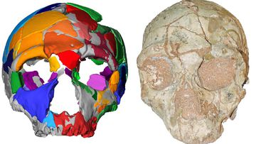 Two skulls found in Greece are believed to belong to the oldest humans found outside Africa.