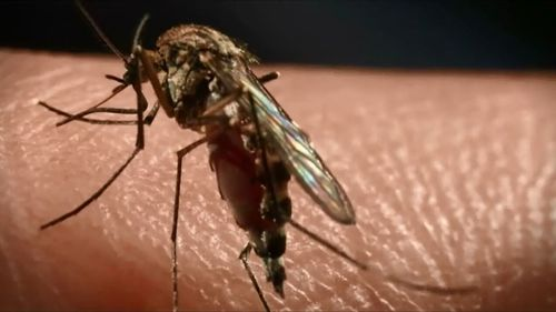 Experts suggest mosquitoes may play a part in spreading the disease.